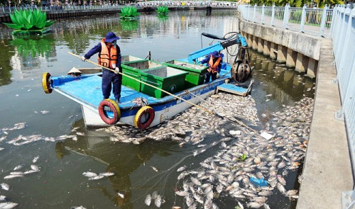 More fish deaths in Vietnam: 70 tonnes of dead fish wash up just a month after 200 tonnes...