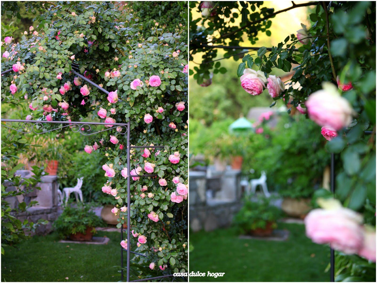 Casa dulce hogar rosas de mi jard n for Ahuyentar gatos de mi jardin