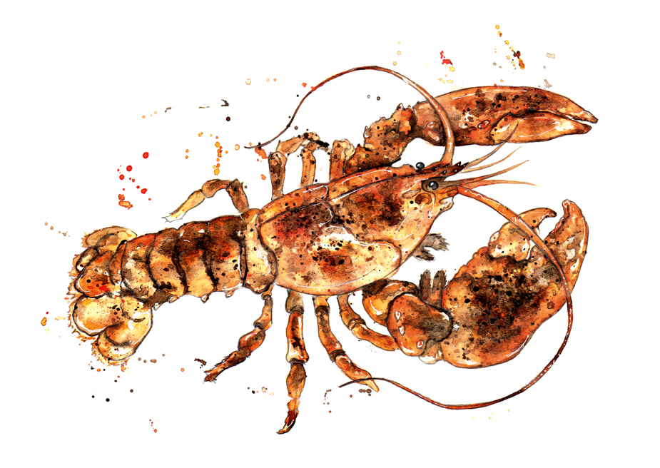 the great crustaceans of maine lobster These food network-approved spots across the country stick close to the maine lobster roll  the succulent crustaceans in  great lobster rolls.