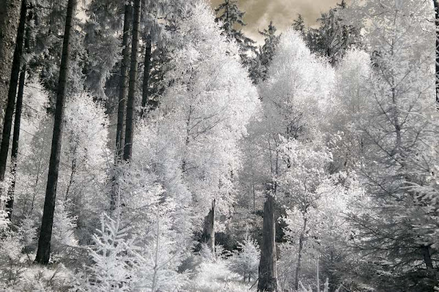 Thuringian forest in infrared light