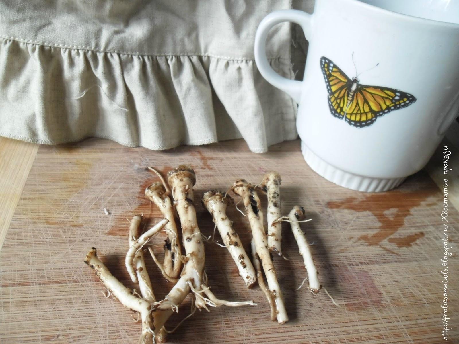 Как из корней одуванчика сделать кофе