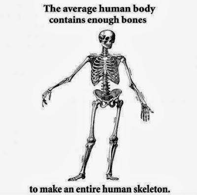 http://2.bp.blogspot.com/-9tnCgl4s-9k/UtyvncglADI/AAAAAAAAC_E/NwDr0aespso/s1600/The+Average+Human+Body%E2%80%A6.jpg