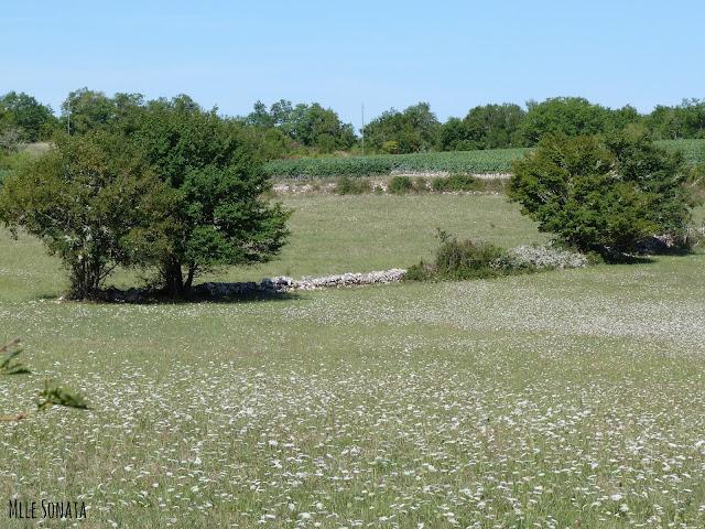 Randonnée dans le lot Cahors mur pierre