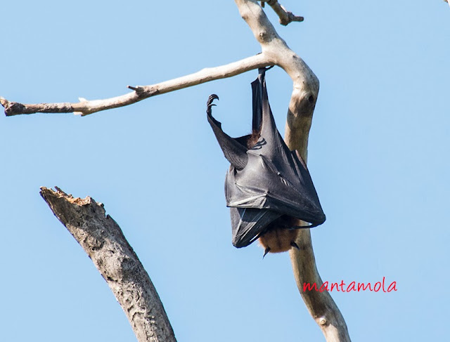 Flying Fox, Thailand