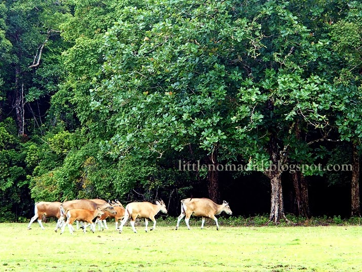 Peucang Island Ujung Kulon National Park