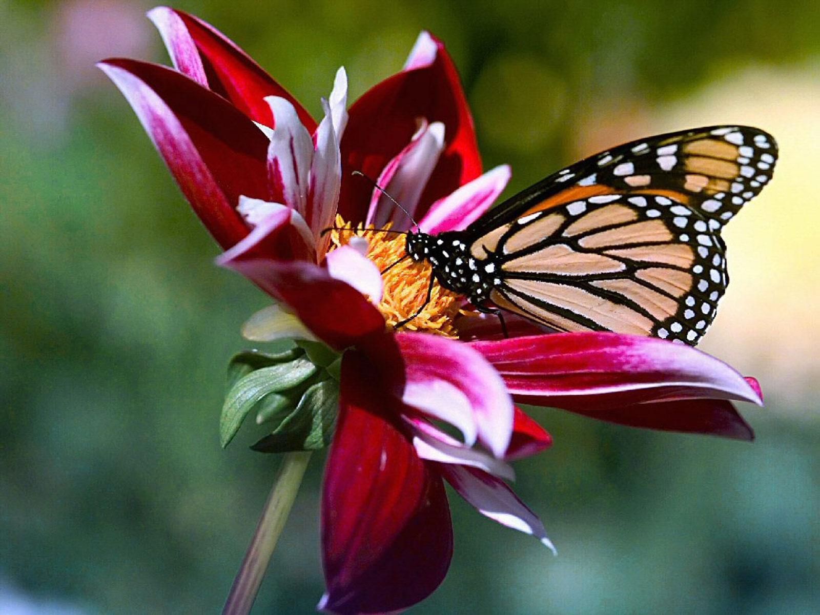 Открытка для женщины с цветами и бабочками на День рождения 99