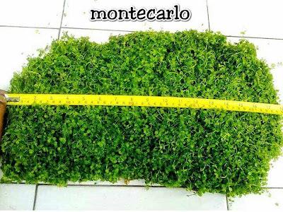 Jual Montecarlo Murah
