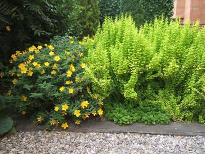 Arte y jardiner a arbustos aut ctonos una buena elecci n - Arbustos de jardin ...