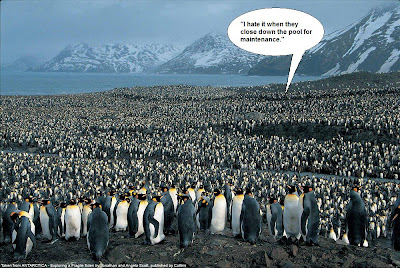 Heard from the crowd of penguins... 'I hate is when they close the pool for maintenance!'