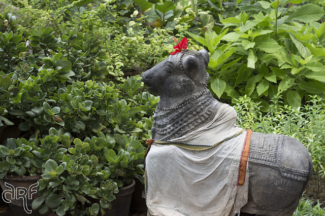bull statue with red hibiscus flower