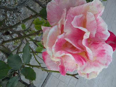 Resultado de imagen de postales de flores en relieve