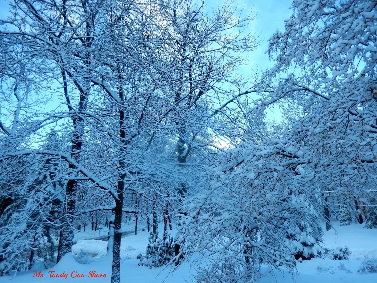 Winter Scenes --- Ms. Toody Goo Shoes
