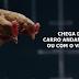 O melhor comercial com galinhas dançando que você já viu