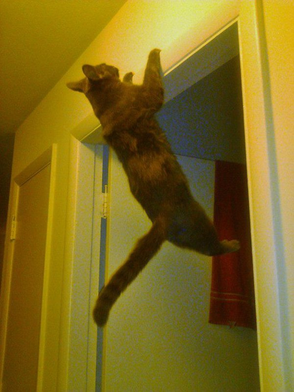 funny cat pictures, cat hang on door