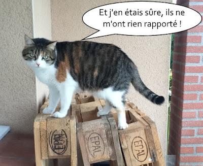 Jolie chatte tricolore de l'école du chat libre de toulouse.
