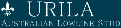 Urila Australian Lowline Stud