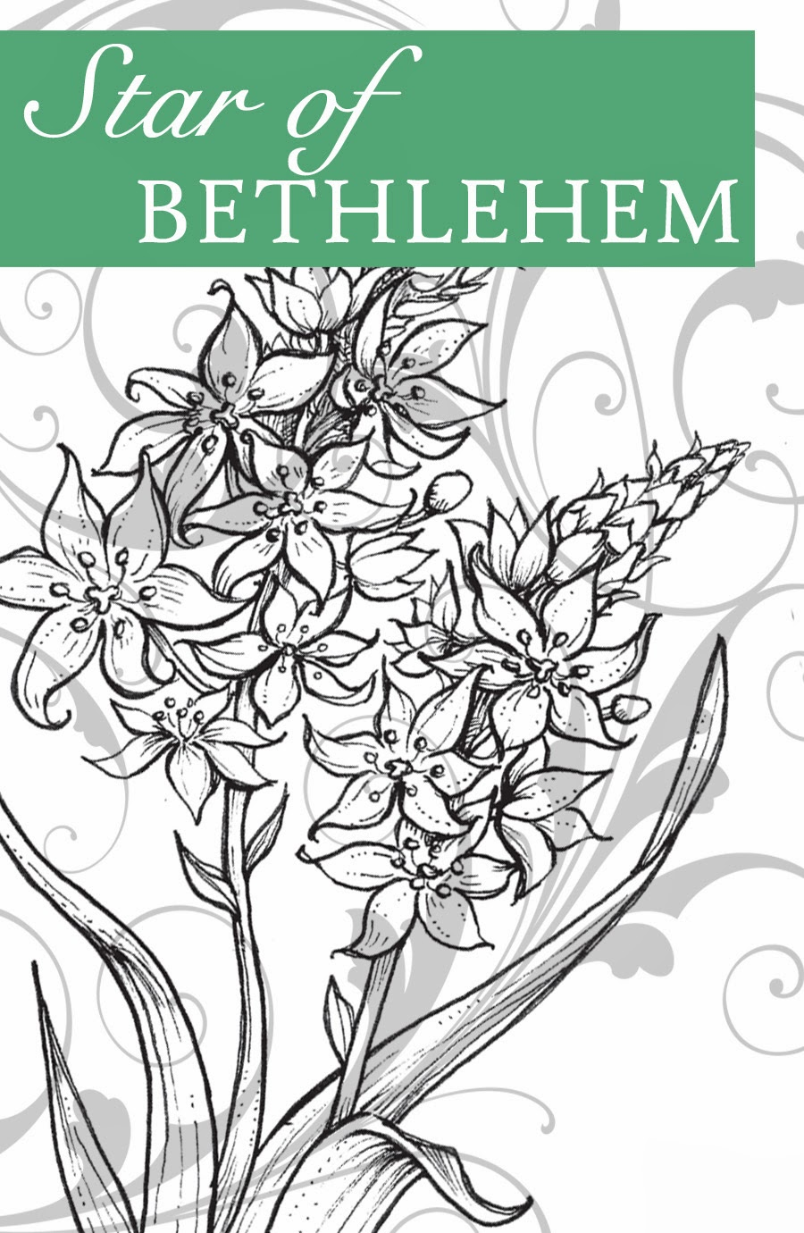 star of bethlehem flower meaning  flower, Natural flower