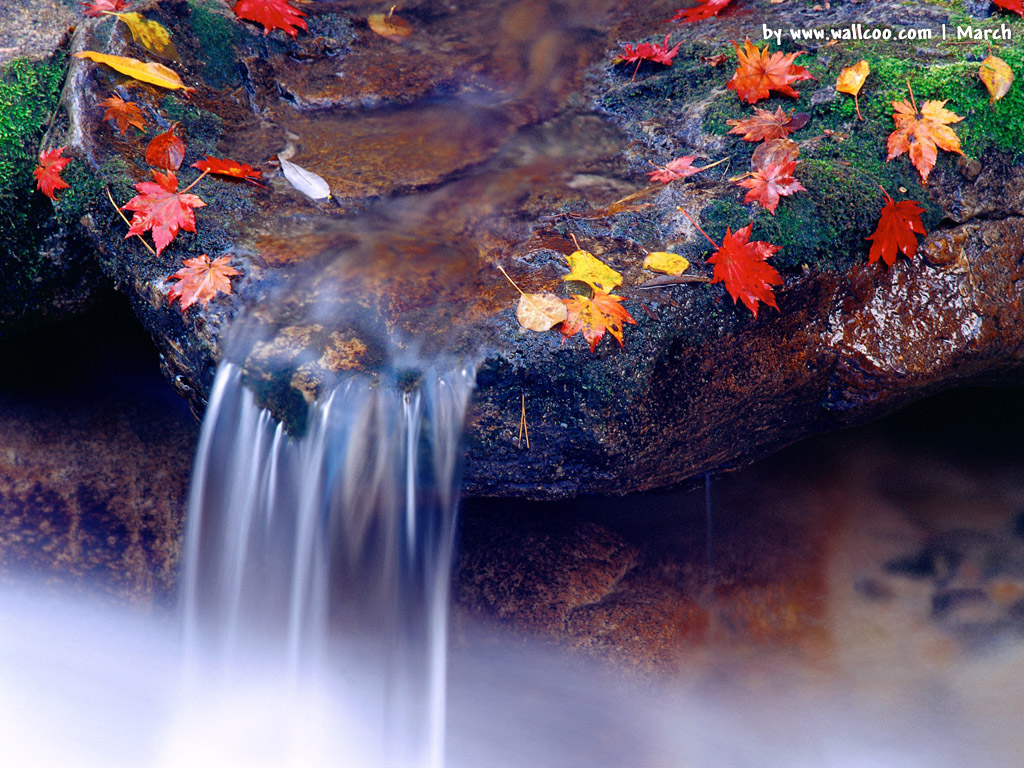 http://2.bp.blogspot.com/-9xfppoxXqug/UHo6rv18v9I/AAAAAAAAAkA/P9oXAkbPlAY/s1600/hd_latest_spring_wallpapers.jpg