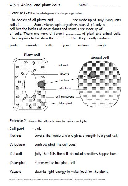 Free printable science worksheets for year 5