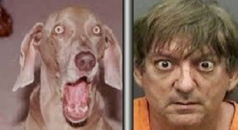 Man Calls 911 After He Becomes 'Stuck In The Act' With His Dog
