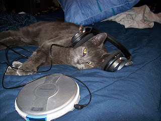 cat with headphones, cat laying down, dubstep cat