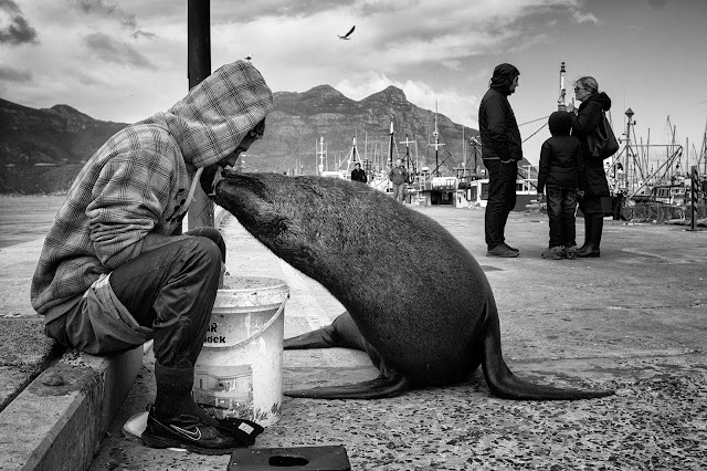 A seal takes food from a fisherman's mouth in this Hout Bay street photo