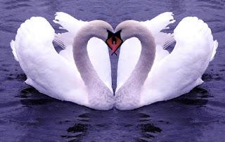 versos-de-amor-romanticos