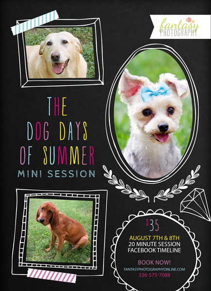 pet dog photographers in winston salem | triad pet photography sessions