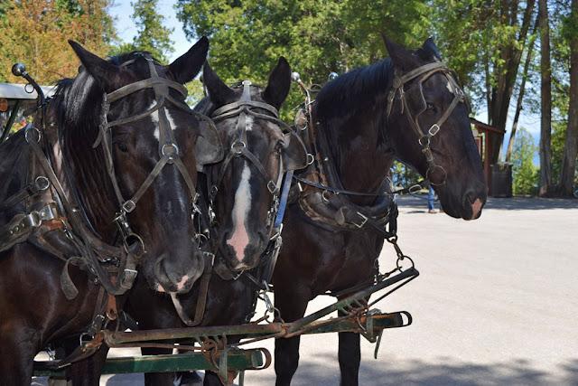 MARIETTE\'S BACK TO BASICS: {Mackinac Island Carriage Tours - Michigan}