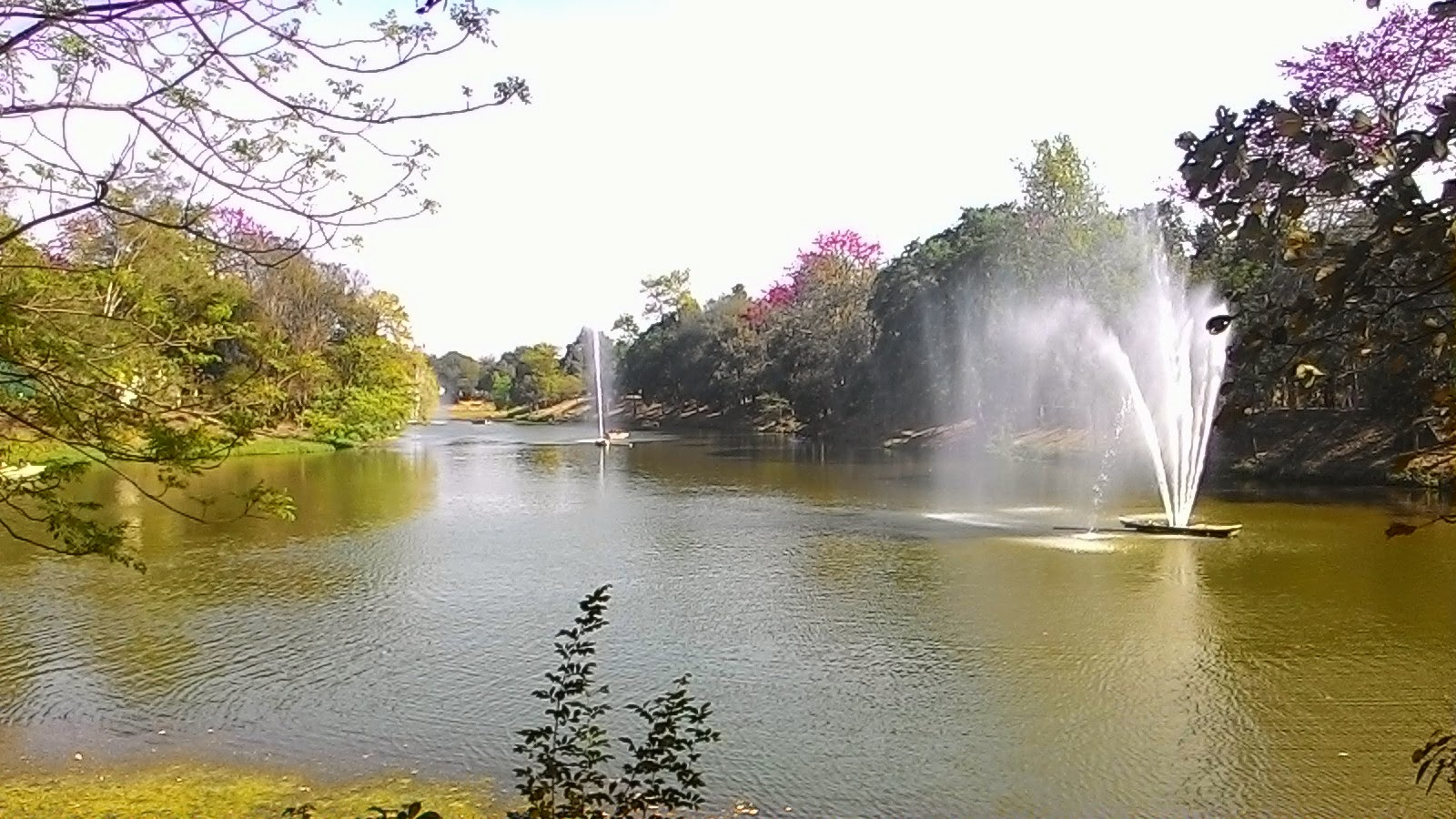Lake ( jheel) Inside Patna zoo