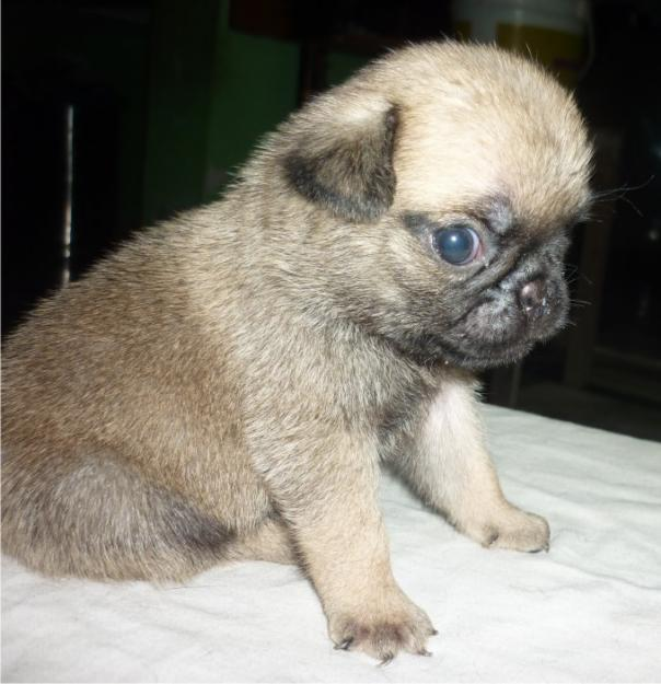 ... -puppies-so-cute-is-available-for-sale-cont-me-98140-65526-Punjab.jpg