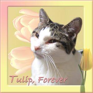 Tulip, Forever