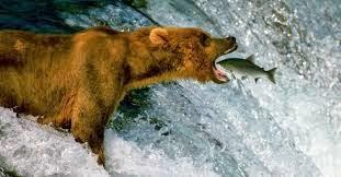 Urso com a imagem mais bonita