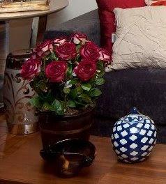 11 Flores para a sua casa...!