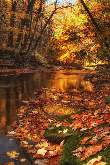 Amazing fall photography leaves of golden trees