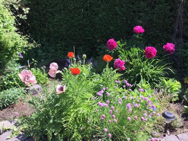 Vues sur le jardin