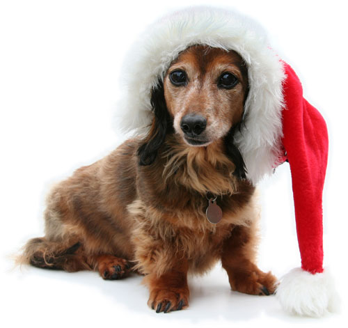 very creative and funny christmas dog imagesfunny christmas dog graphicsbest christmas dog picturesfunny christmas dog galleryfunny christmas dog ideas