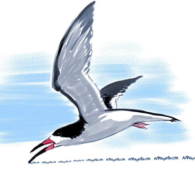Black Skimmer is a bird painting by Artmagenta