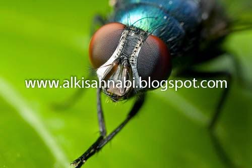 Syurga, heaven, fly, lalat