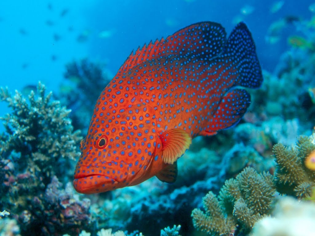Underwater sea creatures and other animals wallpapers for P o fish