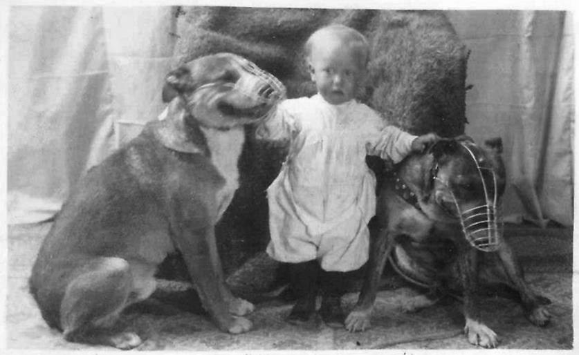 the truth about pit bulls the nanny dog myth revealed