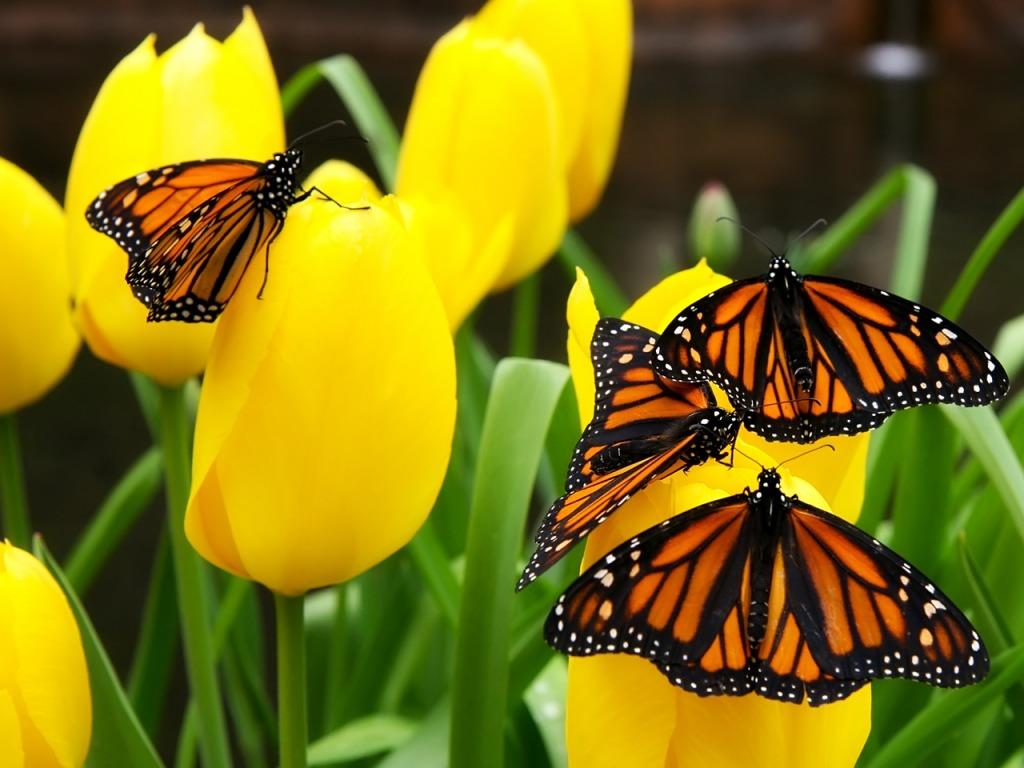 Slijetanje leptira na cvijeće - download besplatna pozadina za desktop biljke...