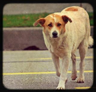 http://www.4freephotos.com/Stray_dog_on_street-limage-957d122db7bb638a72e1a3781974cebe.html#.UYSCCLXCaSo