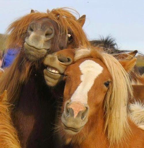 zinkbrist häst symtom