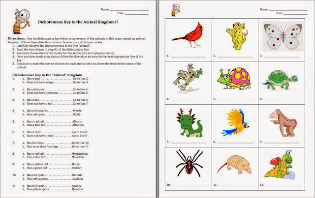 Collection of Dichotomous Key Worksheet Animals Sharebrowse – Dichotomous Key Worksheet