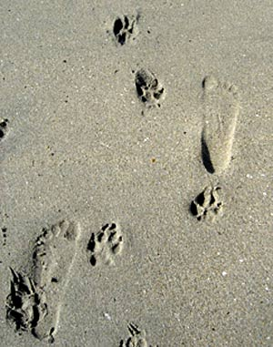 Hd Animals Dog Footprint