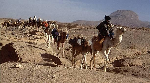 Amazing Arabian Camel Caravan A Camel Caravan In Oman