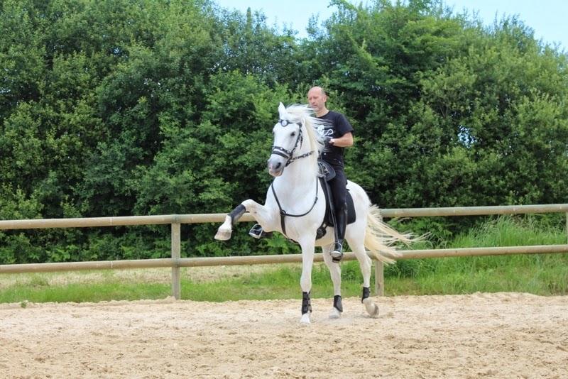 cheval espagnol haute ecole