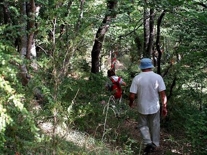 Endinsant-se al bosc de l Sauva Negra