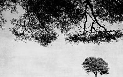 http://society6.com/AnneStaub/prints?tag=black-white&page=1